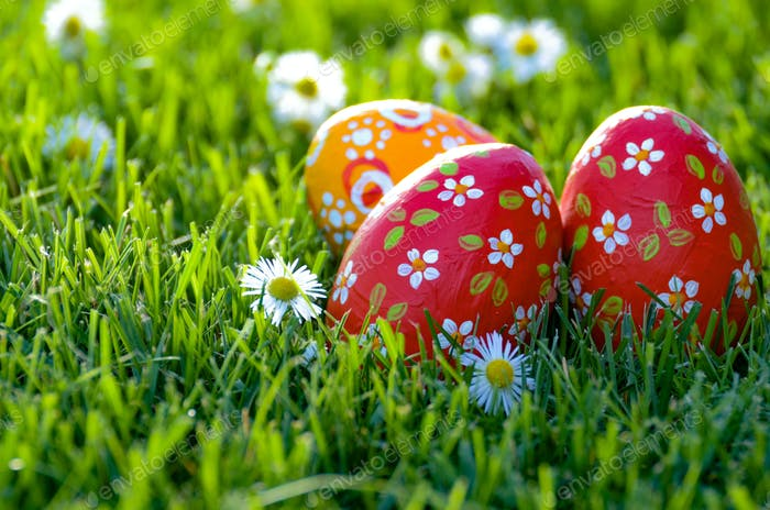 Easter eggs lying on green spring grass along with Bellis flower
