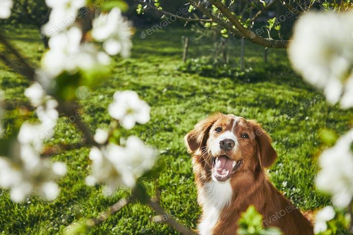 Hund ruht auf dem Garten