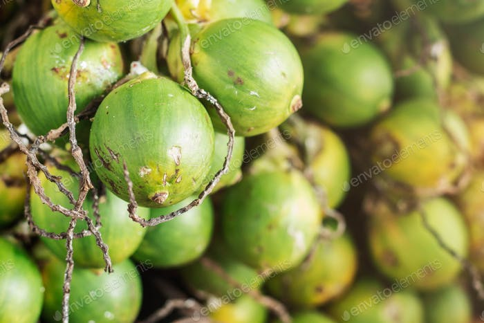 betel nut are fading