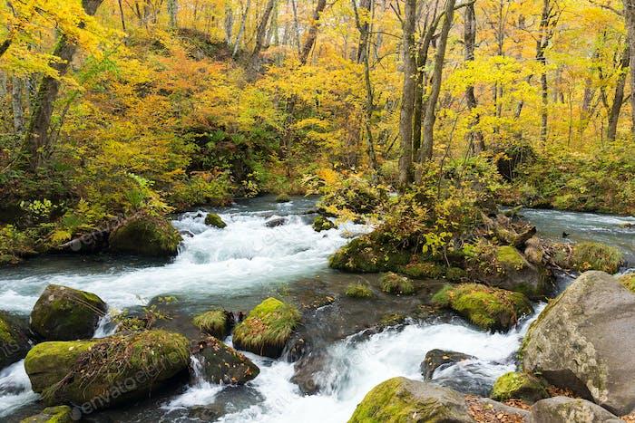 Oirase Stream im Herbst