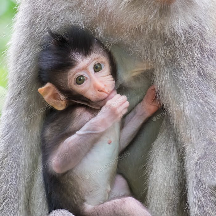 Close-up of a cute baby monkey