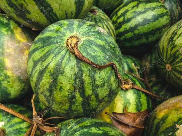 Ripe watermelons aerial