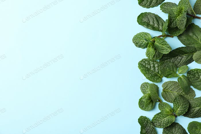 Fresh mint leaves on blue background, space for text