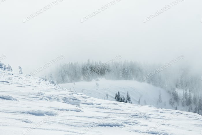 Gorgany mountains snowy forest landscape