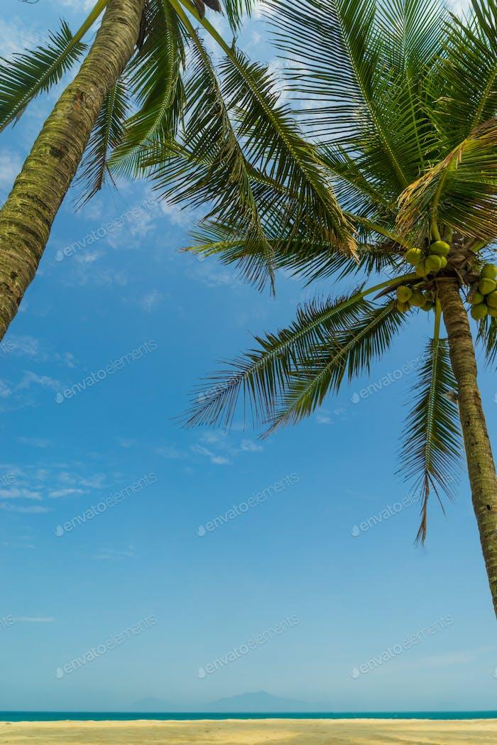 Kokosnussbaum im Resort