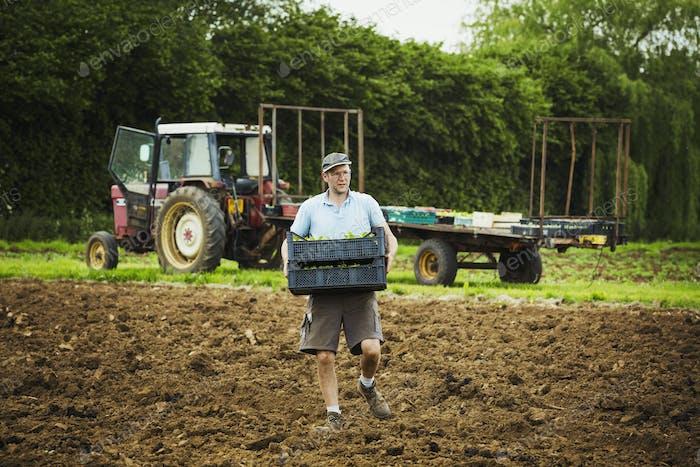 Ein Mann, der ein Tablett mit Sämlingen über ein Feld mit einem Traktor im Hintergrund trägt.