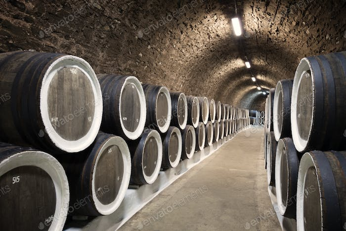 Barrels in the wine cellar