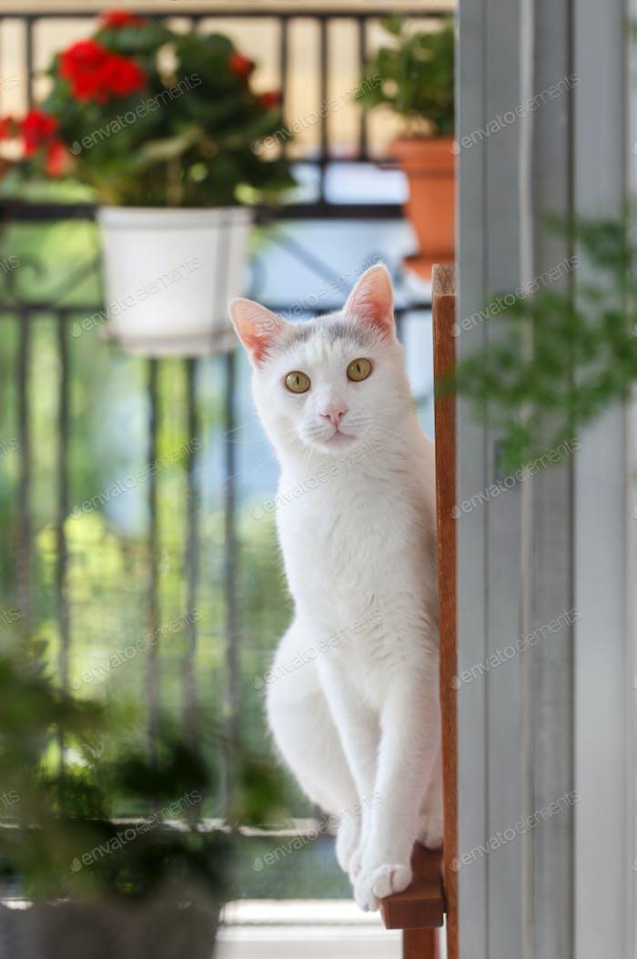 Domestic white cat portrait