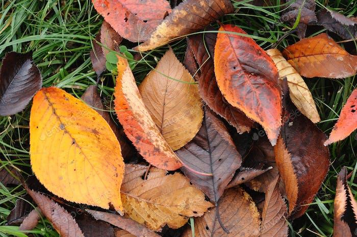 Tree dead leaves