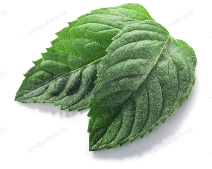 Peppermint leaves (Mentha piperita foliage) isolated w clipping paths, top view