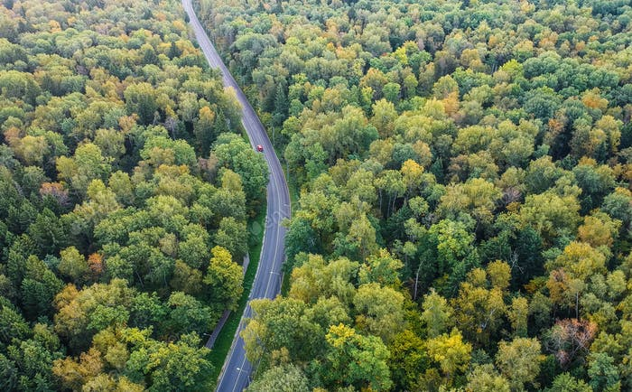 Early autumn forest with a road going throug, aerial view