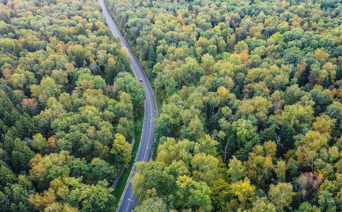 Frühherbst Wald mit einer Straße, die durch die Luft geht