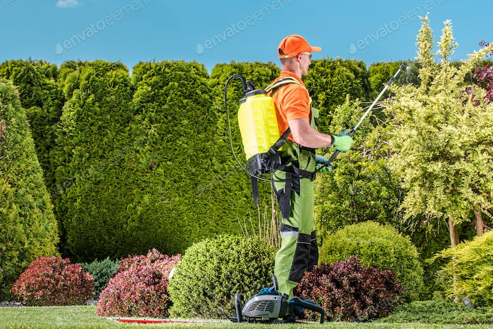Plants Insecticide Work