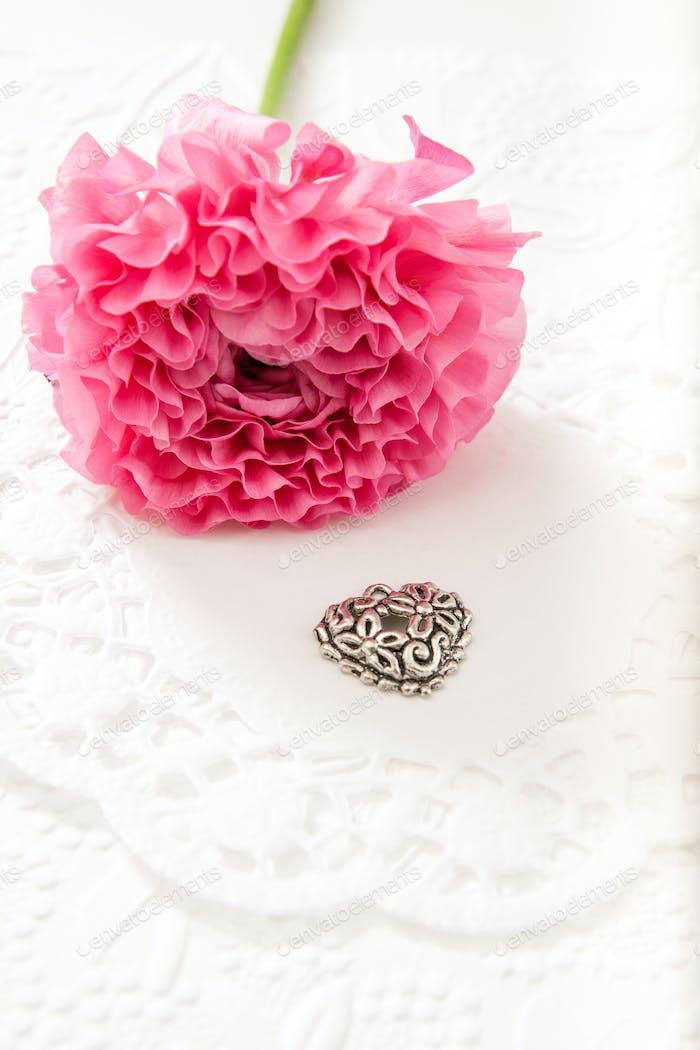 Pink Ranunculus flower