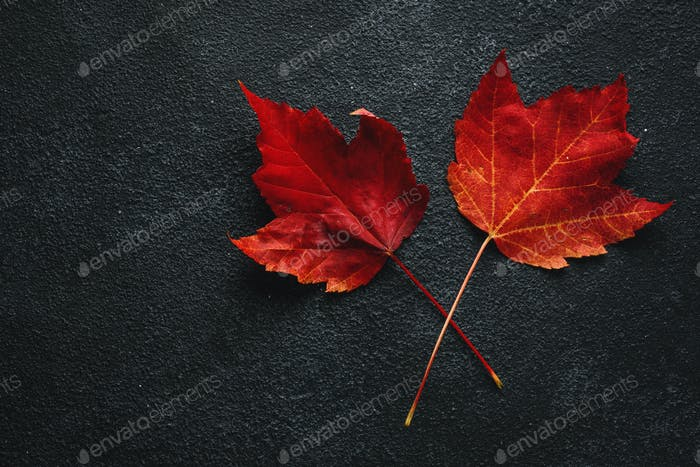 Red maple leaves on dark background