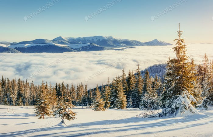 fog in winter mountains. Carpathians. Ukraine. Europe