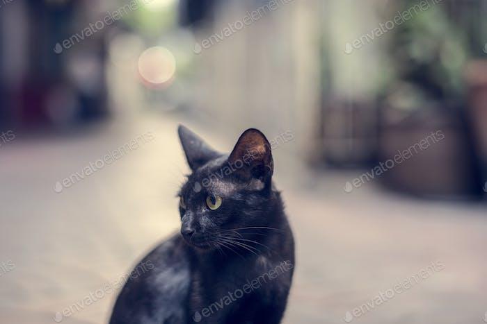 Closeup of black cat sitting alone
