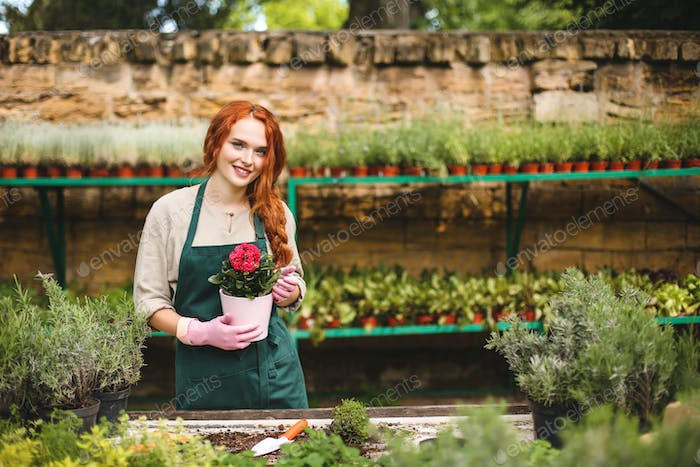 Florist in apron and pink gloves holding in hands beautiful flower in pot happily looking in camera