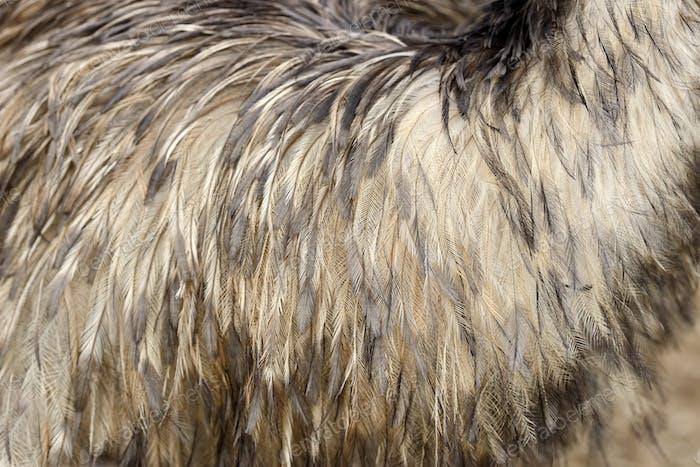 Federn Textur eines Strauß
