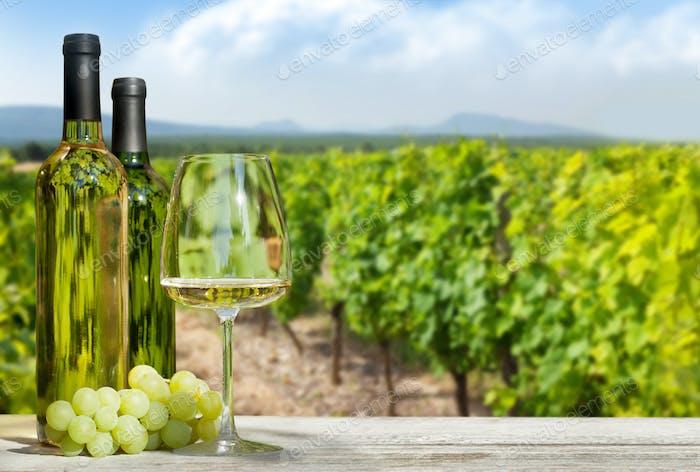 Bunte Trauben im Korb, Weißwein