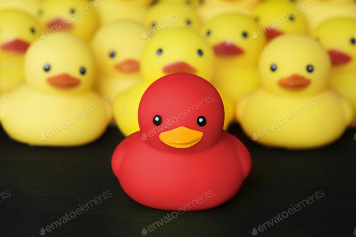 Thumbnail for Closeup of rubber duckies