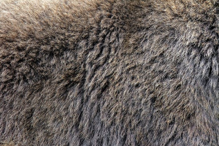 Real texture of brown bear fur