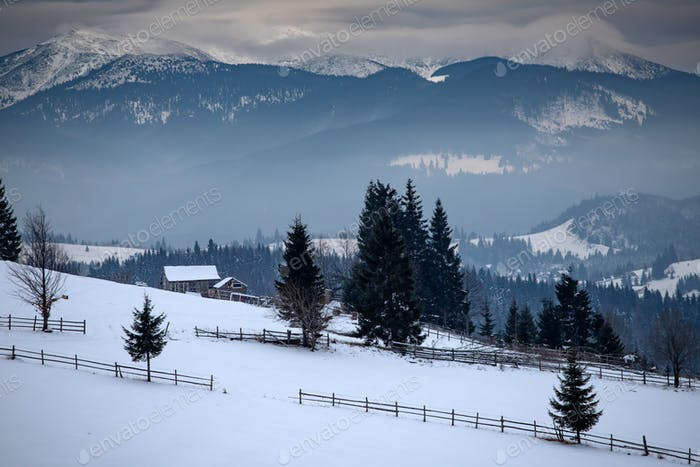 Winter forest in the Carpathians, Romania.
