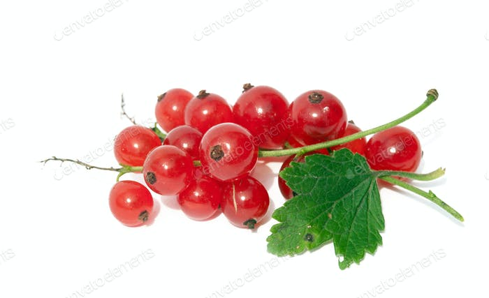 sweet red currants
