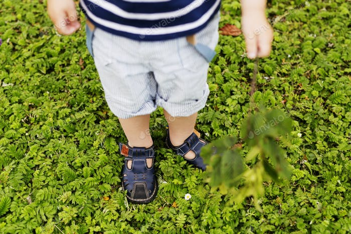 High angle low section of boy standing on plants covered field