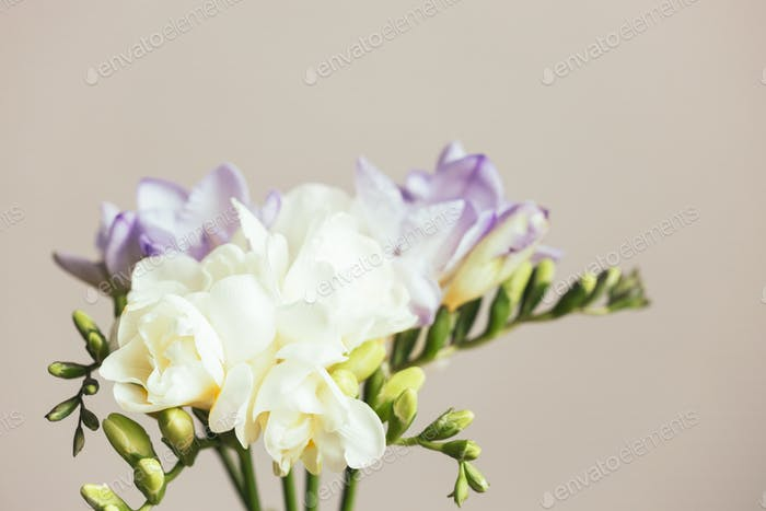 Bouquet of White and Lilac Freesias.