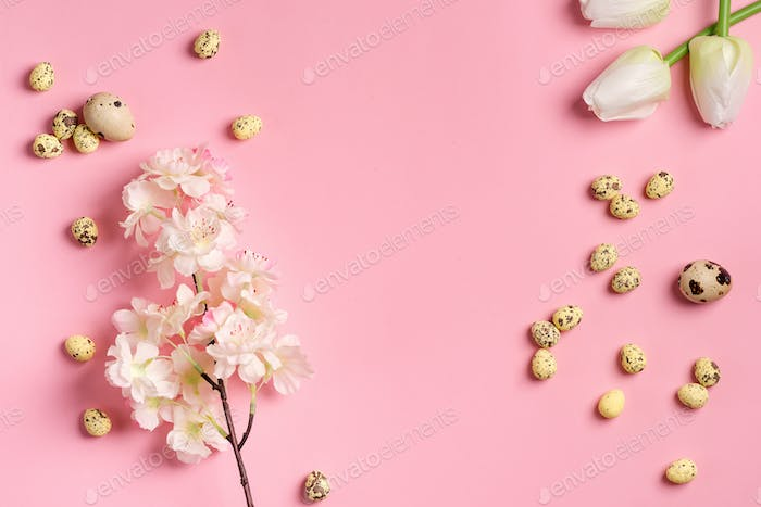 Easter festive composition from quail eggs, fresh tulips and cherries branch on a pink background