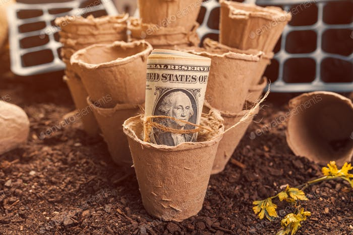 Biodegradable peat pot soil containers and US dollar banknotes