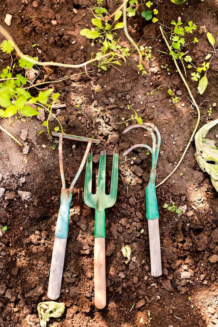 Composition of garden tools in the garden.