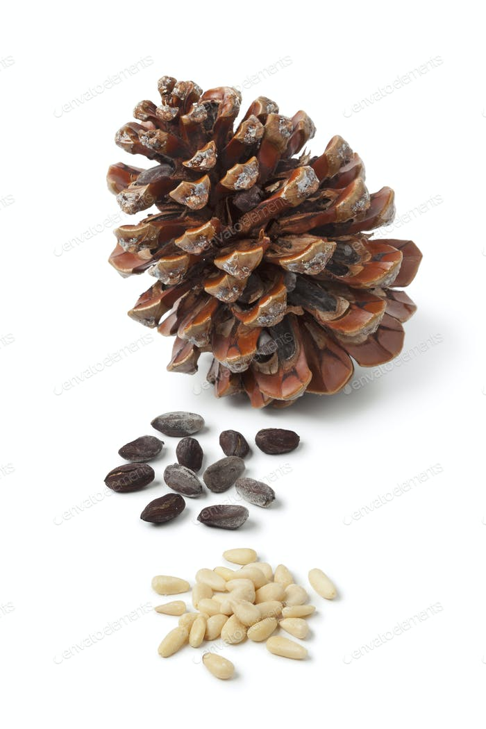 Stone pine cone and seeds