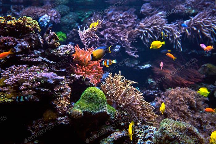 tropischer Fisch auf einem Korallenriff