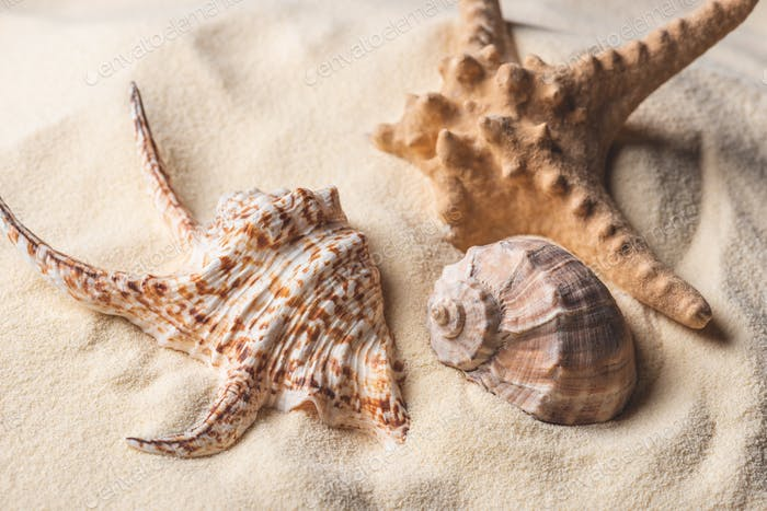 Sea starfish and shells on light sand