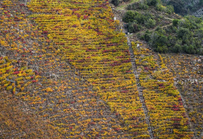 Steep terraced vineyards and structures for grape harvesting