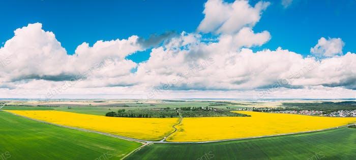 Luftaufnahme von Landwirtschaftlich Landschaft mit blühenden Raps, Ölsaaten in Feld Wiese In