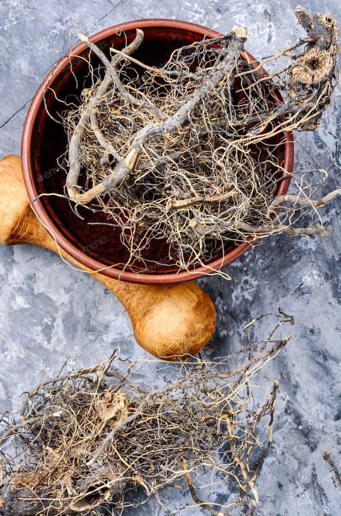 Maral root in herbal medicine
