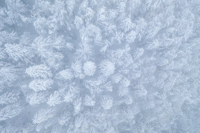 Aerial image of a winter forest