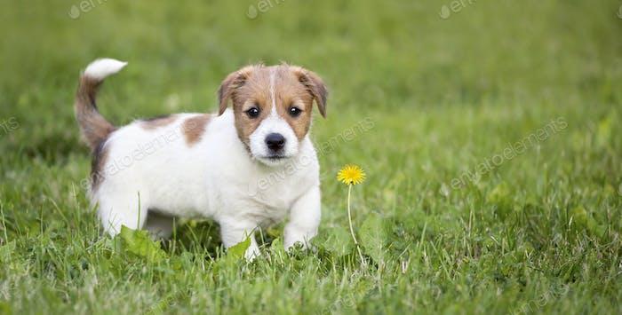Glücklicher Hund Welpe im Gras suchen