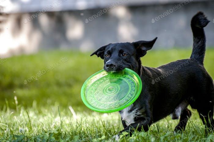 Hund & Frisbee