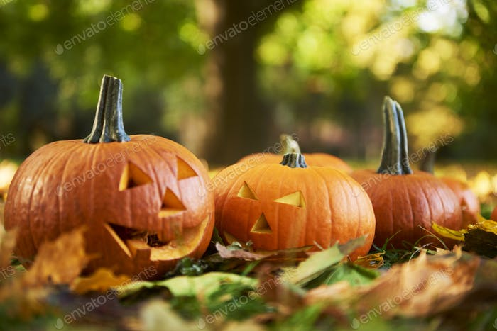 Close up of  halloween pumpkins in autumn forest
