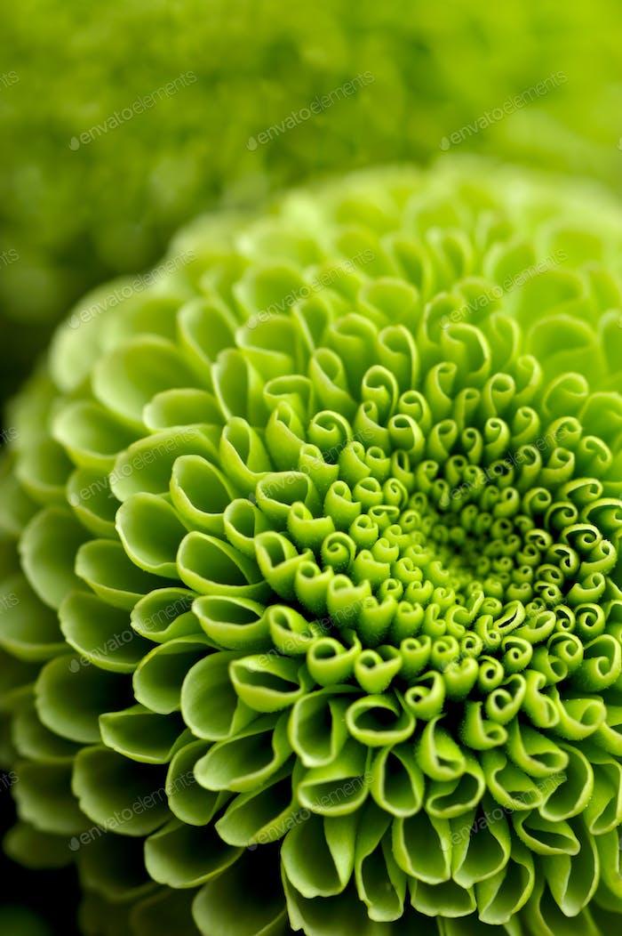 Grüner Hintergrund mit Blumenmuster