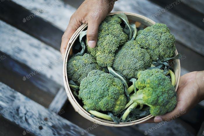 Organic Broccoli just harvested