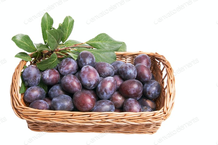 Juicy plums  in the basket.
