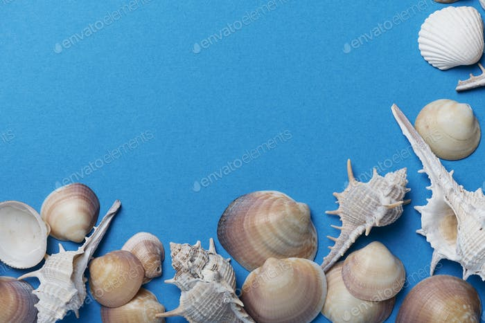 Seashells on the blue background