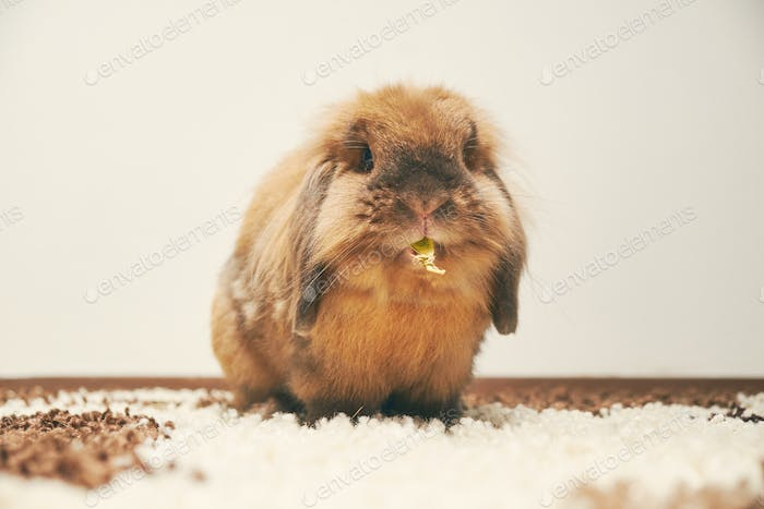 Bunny eating  white background