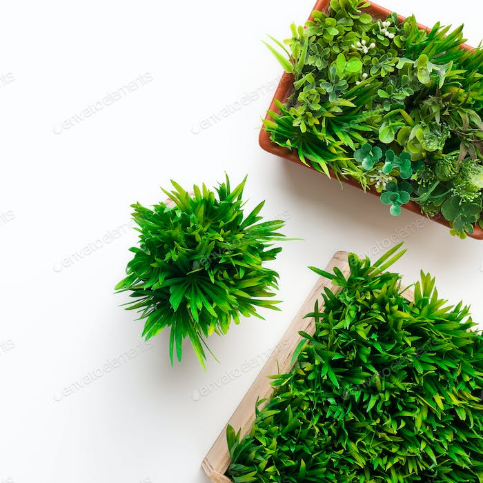 Grassy plants in round and square pots on white background