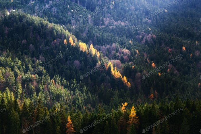 Autumn season theme. Detail of coloured forest. Garmisch Partenkirchen, Bavaria, Germany